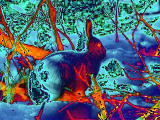20080917200623-conejo-blanco.jpg