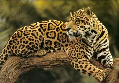 20120306163931-jaguar.jpg